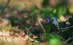 Картинка цветы, ветки, лепестки, синие
