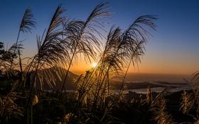 Картинка поле, небо, трава, солнце, закат, тучи, вечер