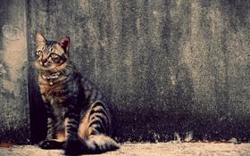 Обои кот, стена, полосатый, animals, cat, pets