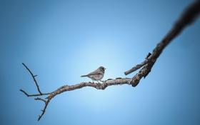 Картинка ветка, фон, птица