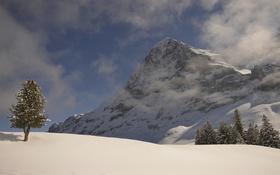 Картинка небо, горы, снег, склон, зима, дерево
