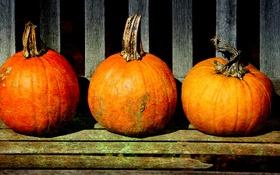 Картинка pumpkins, storage, stalks