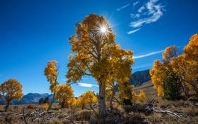 Обои природа, деревья, осень