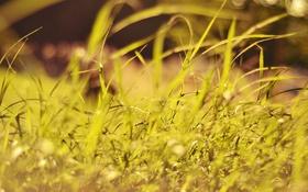 Картинка лето, трава, зеленая