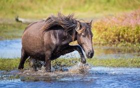 Обои вода, брызги, лошадь