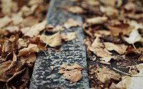 Обои осень, листья, сухие