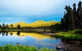 Картинка горы, Colorado, деревья, берег, озеро, Rocky Mountain National Park, лес