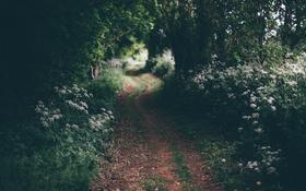 Обои лес, цветы, растения, дорожка, тропинка