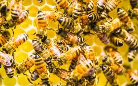 Обои улей, фон, пчёлы