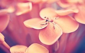 Картинка цветок, макро, фото, лепестки
