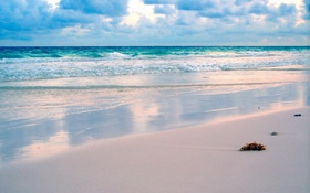 Обои песок, пляж, водоросли, пространство, океан