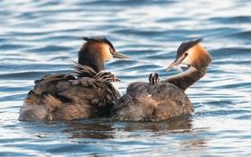 Картинка природа, вода, птицы
