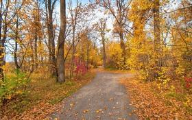 Обои листья, осень, парк, деревья, дорога