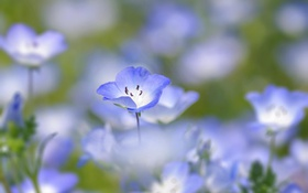 Обои flower, blue, macro