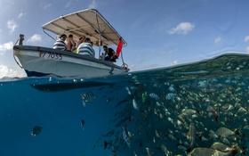 Картинка море, лодка, рыбы