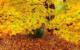 Обои осень, лес, деревья, листва