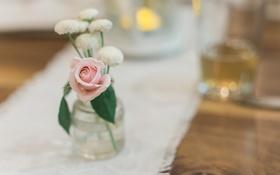 Картинка цветок, роза, лепестки