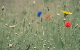 Обои луг, цветы, трава, поле