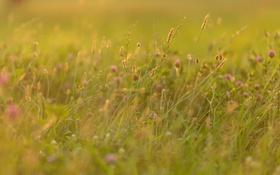Обои поле, трава, природа