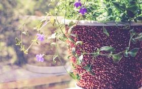 Обои листья, цветы, растение, лепестки, горшок