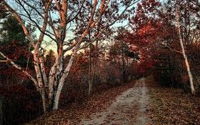 Обои природа, осень, дорога