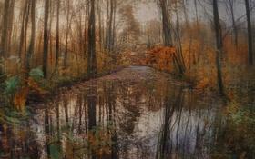 Обои осень, лес, листья, деревья, отражение, река, ручей