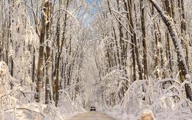 Обои дорога, лес, зима