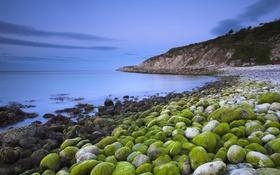 Картинка море, водоросли, камни, берег, Англия, Дорсет