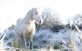 Картинка лето, конь, природа