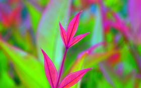 Обои листья, растение, цвет, паутина, ветка