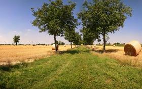 Обои трава, деревья, поля, стог, сено, аллея