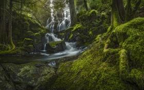 Обои поток, лес, река, природа