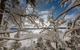 Картинка зима, снег, деревья, ветки, озеро