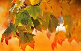 Обои природа, осень, листья