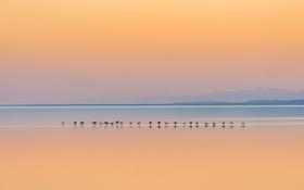 Обои закат, горы, птицы, озеро, отражение, утки, зеркало