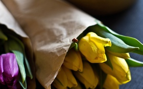 Обои цветы, божья коровка, желтые, лепестки, тюльпаны