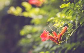 Обои цветок, листья, лепестки