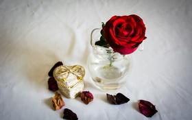 Картинка цветы, роза, лепестки, красная роза