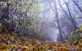 Картинка осень, лес, листья, деревья, ветки, туман, дорожка