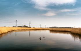 Обои небо, облака, река, утки, линии электропередачи
