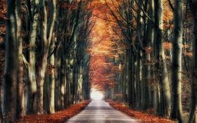 Обои дорога, осень, деревья