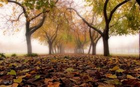 Обои листья, город, осень, улица, туман