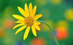 Обои стебель, лепестки, растение, природа, цветок