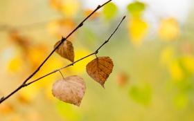 Обои листья, желтый, осень, деревья