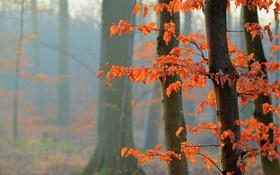 Картинка осень, лес, листья, дерево