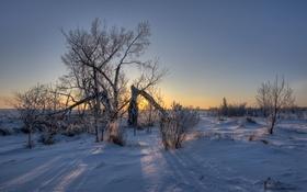 Обои зимой, снег, солнечный свет, ветви, тени, дерево, поле
