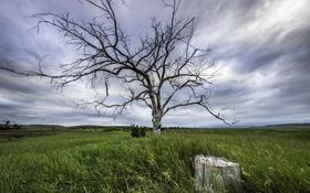 Картинка поле, дерево, пень