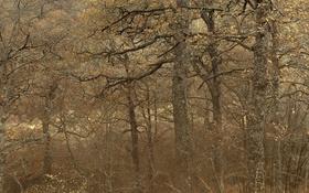 Картинка деревья, лес, природа