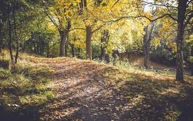 Обои трава, листья, деревья, ветки, путь, солнечный свет