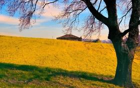 Картинка крыша, осень, небо, трава, дом, дерево, холмы